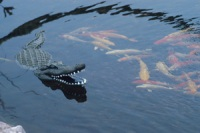 Aquascape Pond Supplies: Floating Alligator Decoy | 						 						</div> 						 						 										<a href=